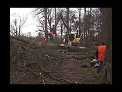 De stormschade van 18 januari is enorm 200 miljoen euro